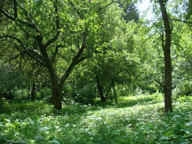 Покупка продажа земельных участков в Московской области